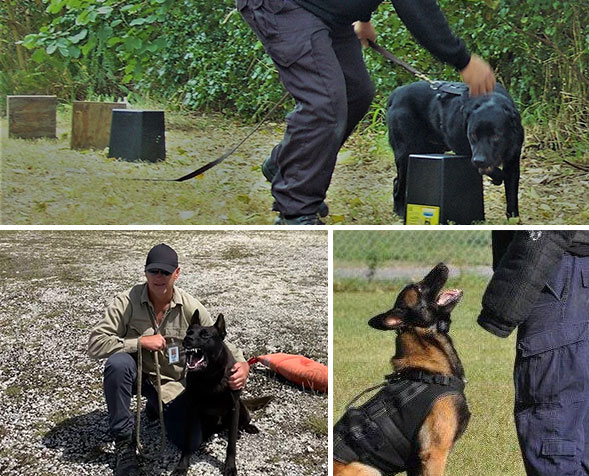 Photos training our detection dogs