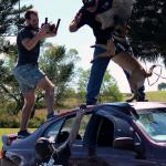 Jamie on top of car with attack dog