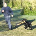 Jamie in park running Dutch Sheperd