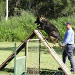 Jamie and dog on obstacle course