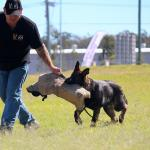 Jamie with puppy Malinois attack training