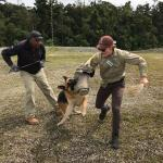 Mason with assistant training German Sheperd to attack