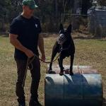 Scott training dog to jump over concrete pipes