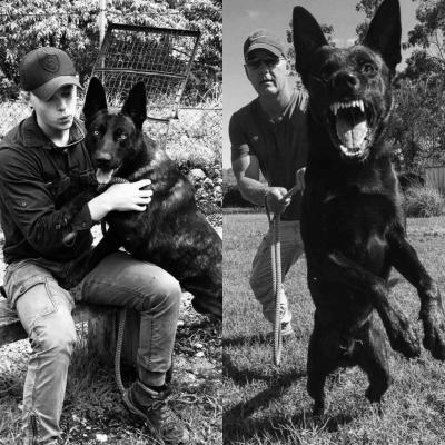Dutch Shepherd. Protection Dogs Guard Dogs