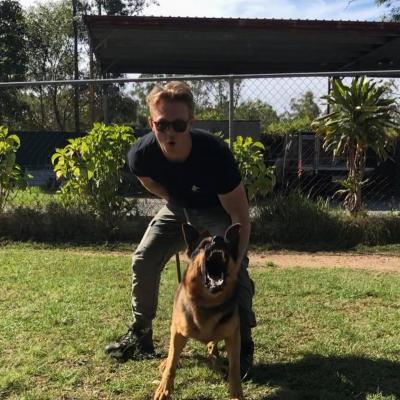 CODY protection dog