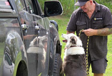 Jamie with detection dog sniffing vehicle for firearm training